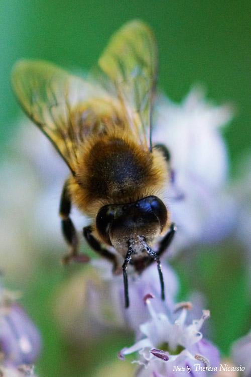 YUM bee